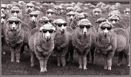 wool-sunglasses[1]